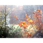 Herbst  --  Loch
