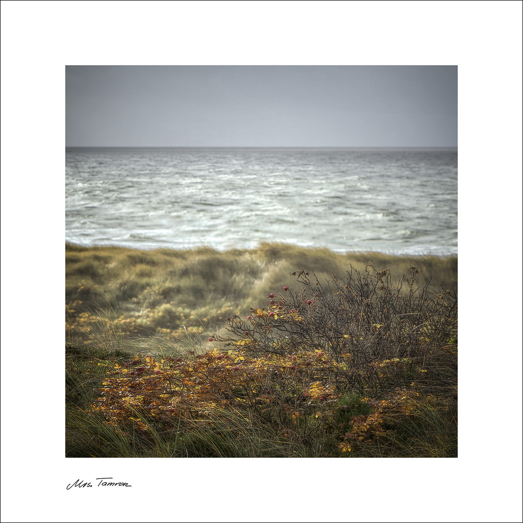 Herbst, Meer, Wind ...