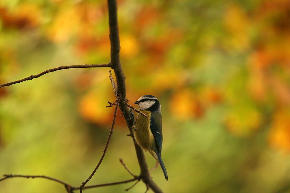 Herbst-Meise 2