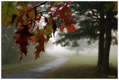 Herbst-Melancholie