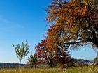 Herbst-Melodie