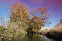 Herbst mit Filter , einfach mal so !