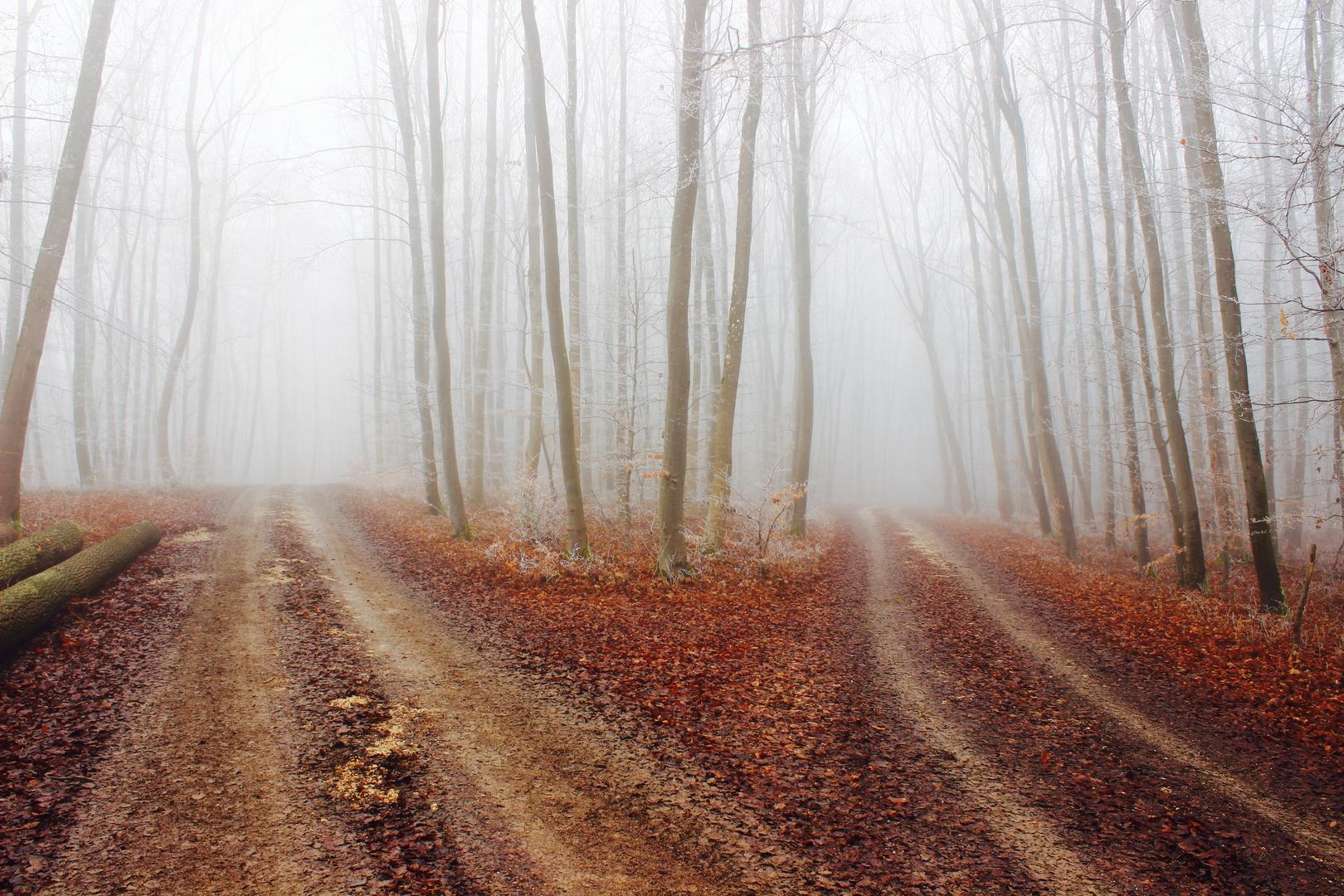 Herbst mit Nebel