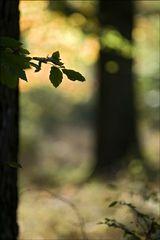 Herbst Momente...