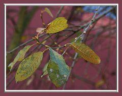 Herbst oder Frühling.......??