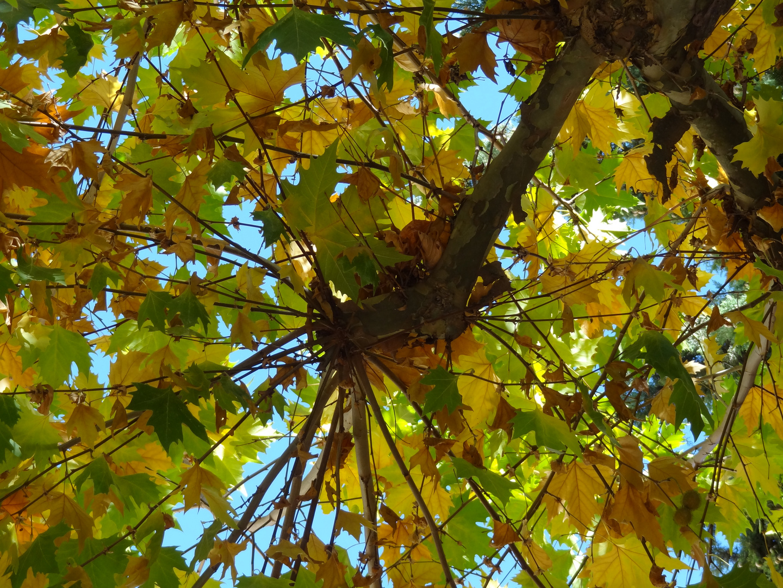 Herbst / otoño 2011 / I