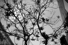 Herbst / Otoño