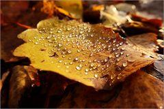 Herbst-Perlen...