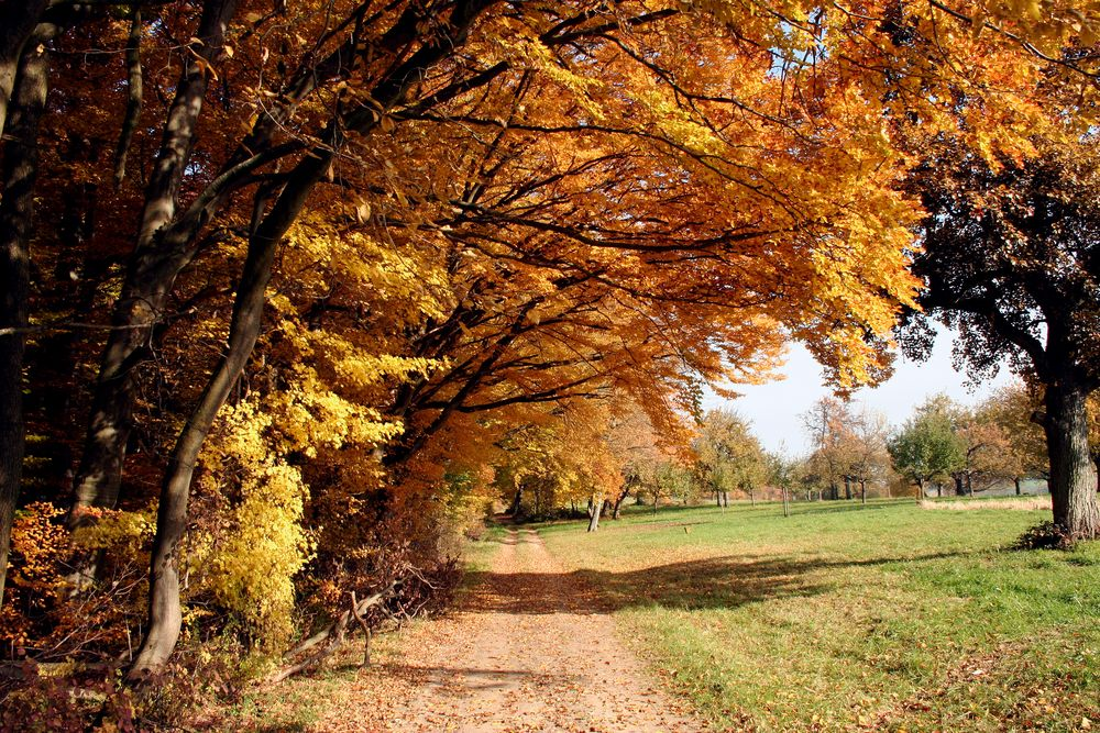 Herbst pur (4)