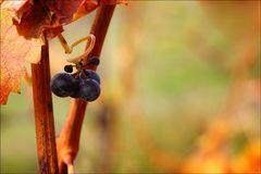 Herbst Rest V