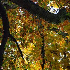 Herbst - Romantik <3