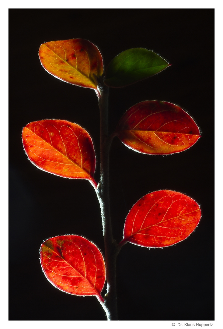 Herbst-Rot (1)
