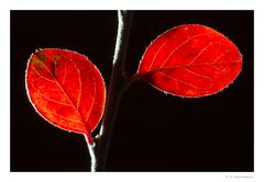 Herbst-Rot (2)