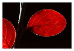 Herbst-Rot (3)