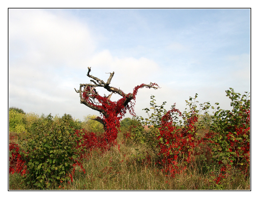 Herbst, rot.