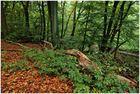Herbst rot-grün