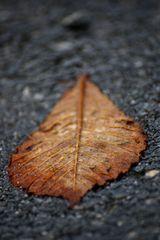 Herbst rückt näher