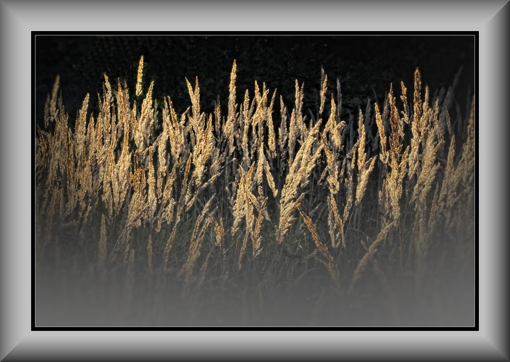 Herbst-Samen......