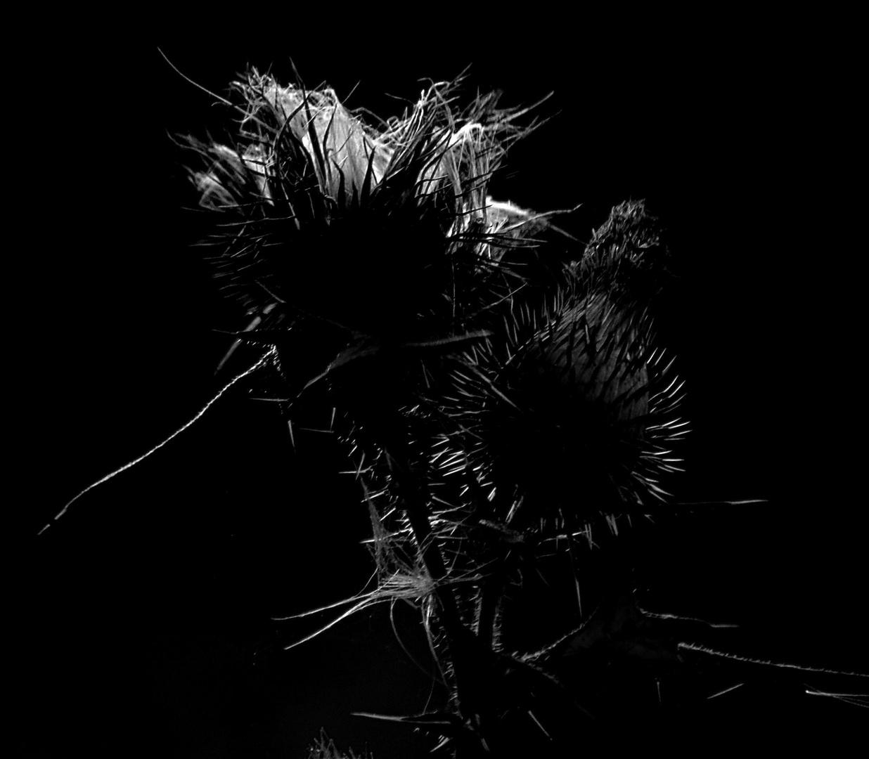 Herbst schwarz - weiss