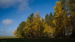 Herbst + Sonne