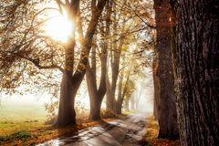 Herbst Sonne