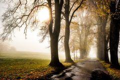 Herbst Sonne II