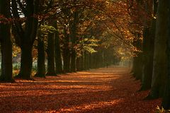 ~ Herbst-Spaziergang ~