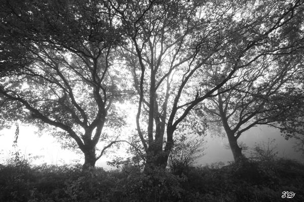 Herbst-Spaziergang im Nebel 7