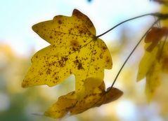 Herbst-Sprossen