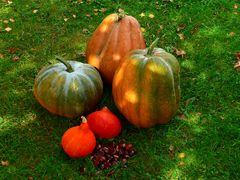 Herbst-Stillleben