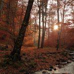 """""""Herbst-Stimmung""""..."""