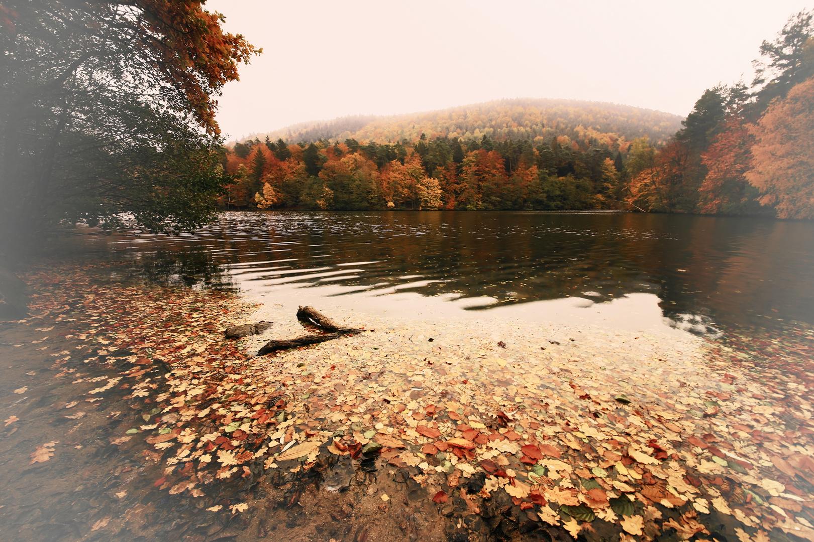 Herbst Total am Seehof Krs. Südwestpfalz am 26.10.2015
