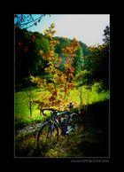 Herbst Tour