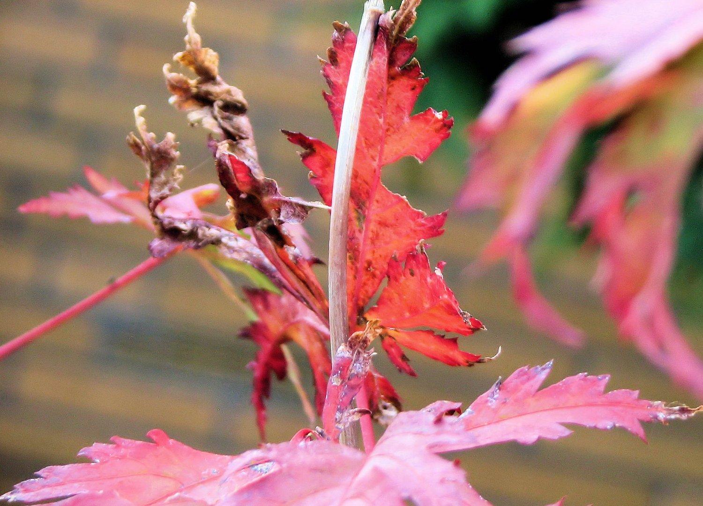 Herbst-Träumereien