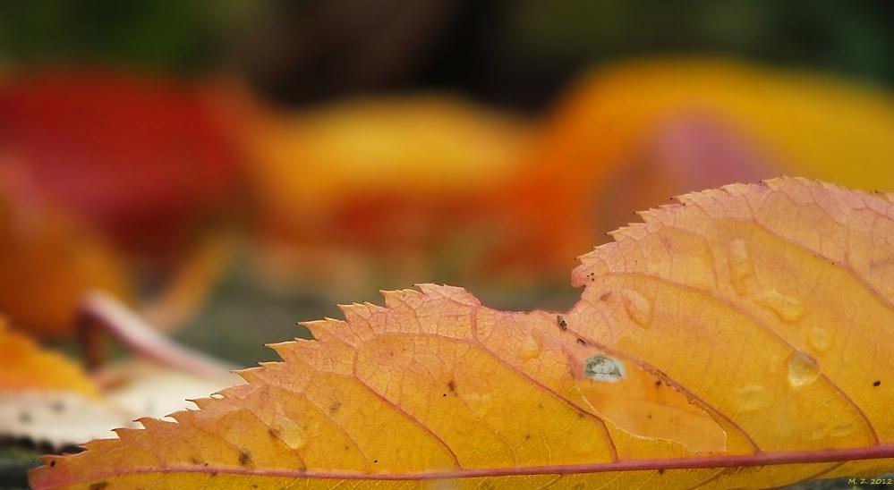 Herbst-Träumerin