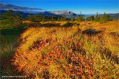 Herbst Tundra
