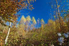 Herbst Tupfer im Walde