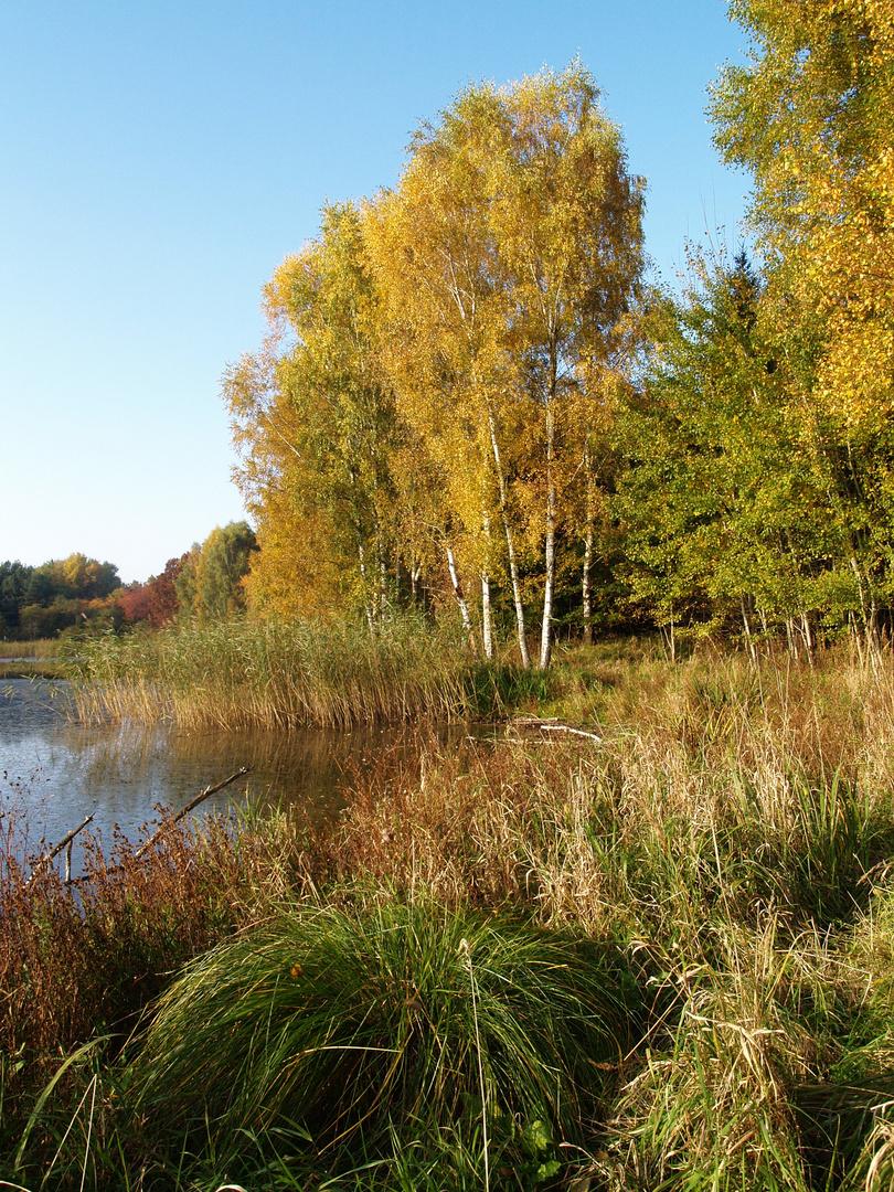 Herbst und Birken