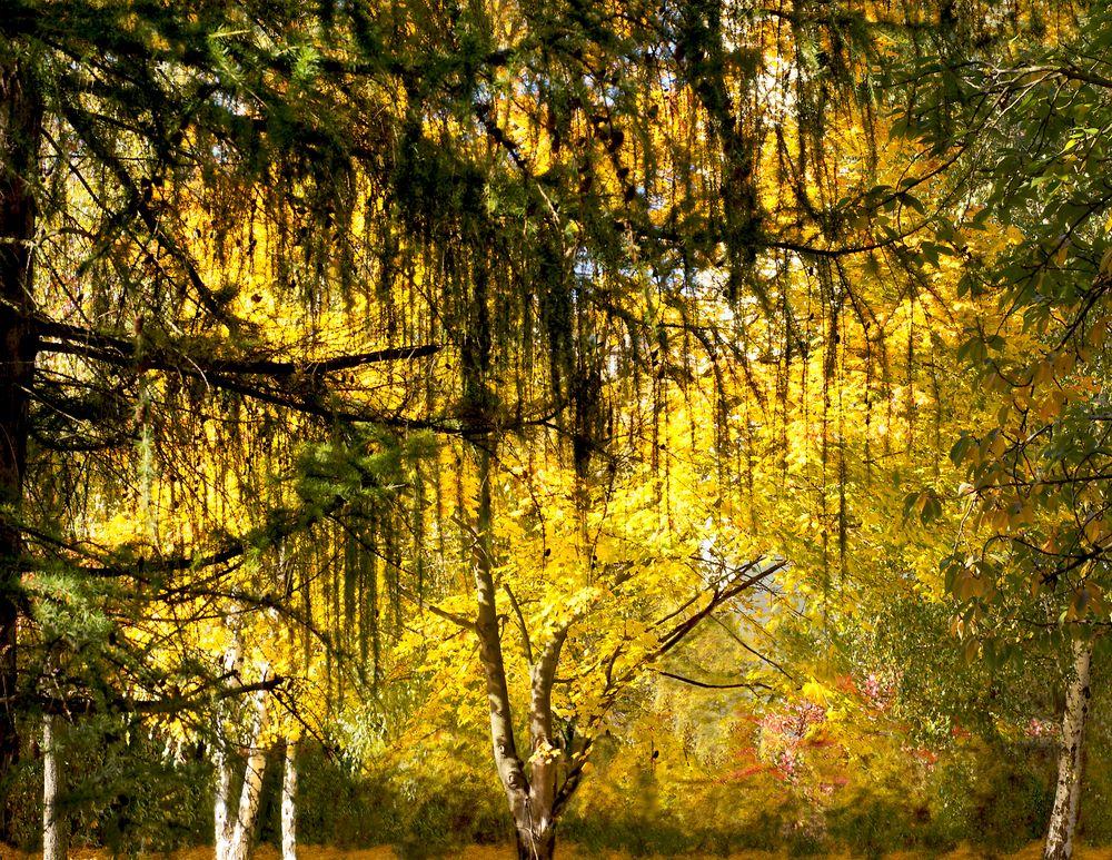Herbst - und etwas traurig
