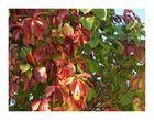 Herbst - und seine wunderschönen färbungen