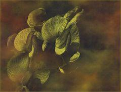 Herbst vergoldet…