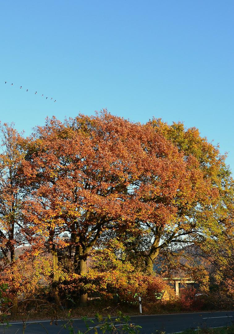 Herbst-Versteck (Burg Nideggen)