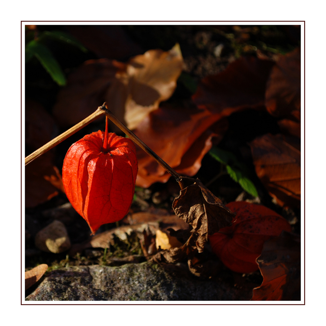 Herbst VIII