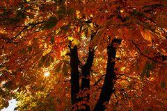 Herbst von seiner schönsten Seite