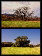 Herbst vs. Sommer