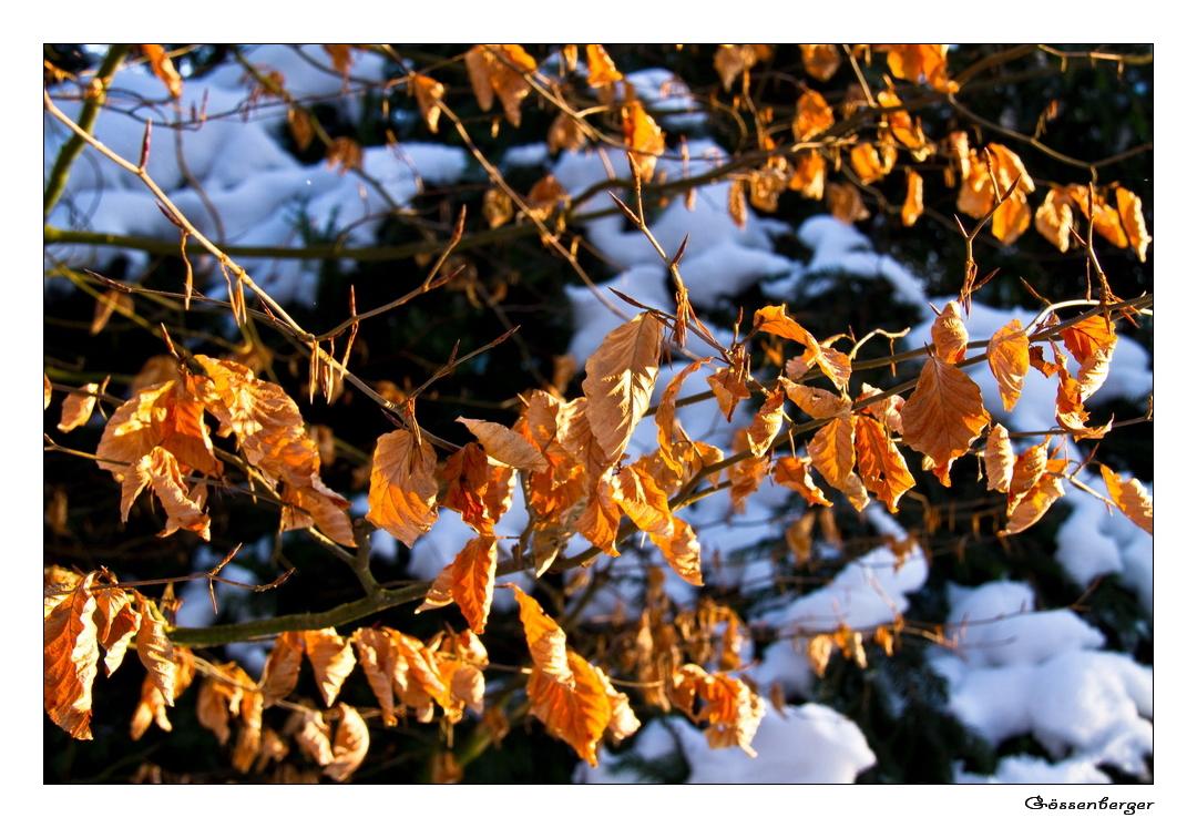 Herbst vs. Winter
