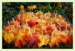 Herbst Wäsche I