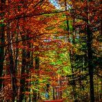 Herbst-Wald