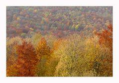 """Herbst-Wald-Farben"""