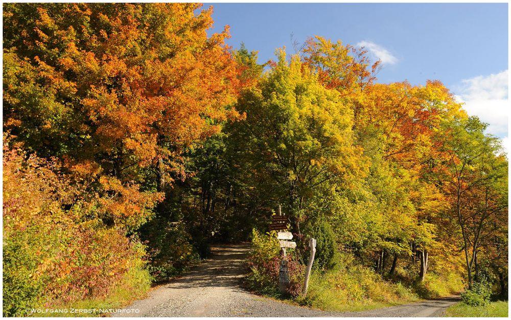 --- Herbst Wald in seiner schönsten Farbe ---